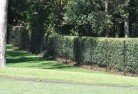 Brandy Creek VIC Wire fencing 15